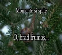 O, brad frumos… – Momente și spițe (34)