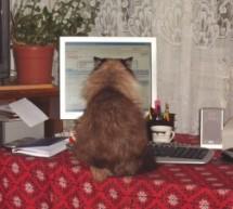 Pisica mea ar scrie mai bine decât mulți reporteri de azi