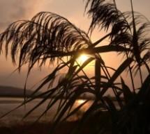 Apus pe lacul Rogojești