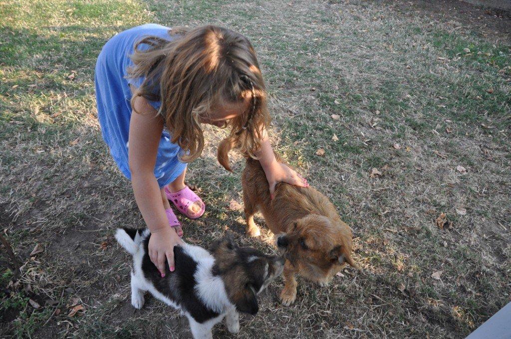 Strănepoata Bunicii, venită din Germania, se joacă prin curte cu Rita și cu Pamfil, un câțel găsit în câmp și care în cele din urmă va ajungfe în Franța, unde câinii nu sunt uciși de mașini în fața porții.